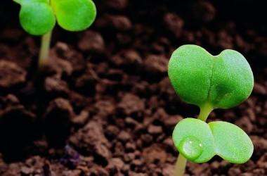 去做些事讓種子埋進土裏!