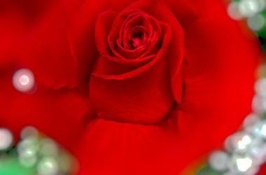 愛是什麼?上帝就是愛,祂將這愛澆灌在你我身上…