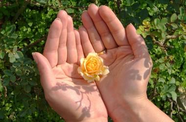 相信禱告 : 你就會節省許多精力,免除許多煩惱,困難也能勝過了;逆境也能順利了