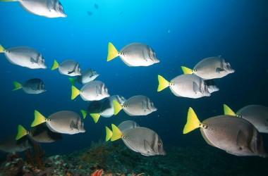 上帝的恩典是夠你用的… 不要像海洋中一條口渴卻不敢喝水的小魚…