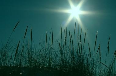 我已經學會了喜愛黑暗;因為處境越黑暗,主的臉越光明。
