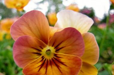 聖潔使我們的心變成上帝的花園──裡面充滿了佳美的果子和花卉,享受著暖和的、活潑的陽光。
