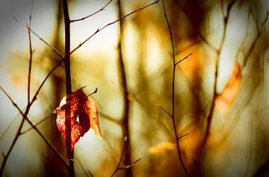 在我們身邊,祂隨時張開慈愛雙臂撐住我們的軟弱…