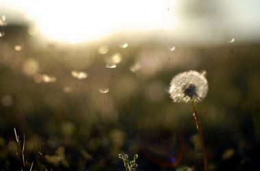 當你經歷失望,陷入困境,你覺得自己被埋葬了,但事實卻是,你只是被栽種了…