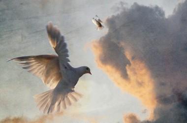 透過聖靈的引導,我們的言語和見證能深入人心,在他人的生命中產生永恆的影響力…