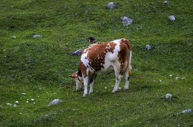 只有與上帝發生新鮮的接觸──住在基督裡──能使我們生命中的瘦牛和細穗跑掉。