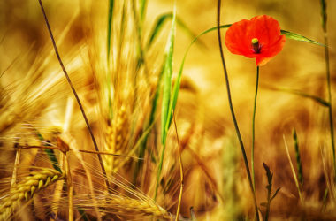 神奇的小花