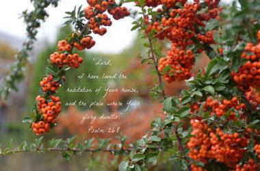 我也將萬事當作有損的,因我以認識我主基督耶穌為至寶。