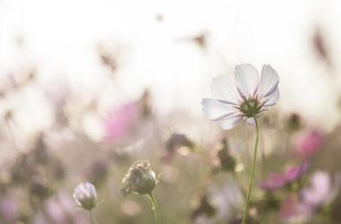 你應該期待更多的恩典、更多的屬靈祝福…不要僅滿足於現狀….