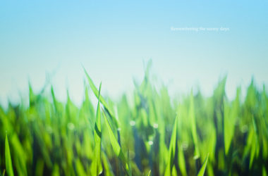 祂必降臨,像雨降在已割的草地上