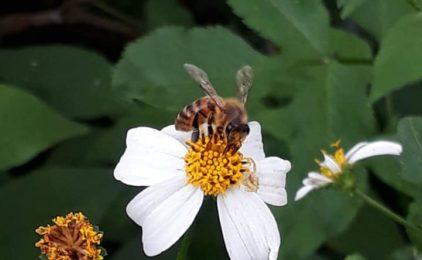 """""""蜘蛛、螞蟻、蜜蜂"""""""