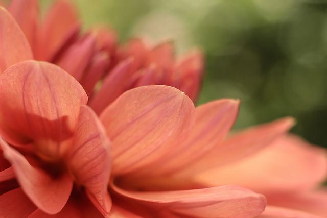 話語很像種子…我們栽種什麽,就收穫什麽…